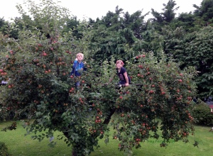 up the apple tree